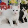 白♀+黒白♂兄弟、ペアで サムネイル6