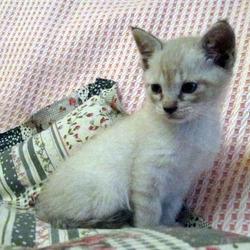 保護猫の葵ちゃん、里親決定おめでとう^^