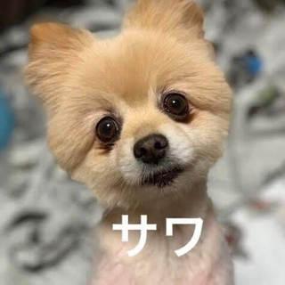 沙和(さわ)明るく元気な甘えん坊