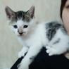 可愛い子猫ちゃん サムネイル5