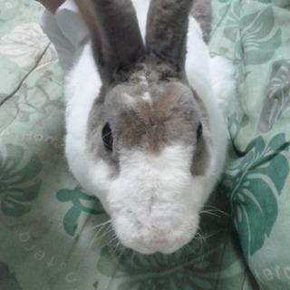 ウサギの里親になられる方いらっしゃいますか。