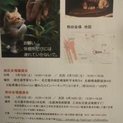 名古屋市熱田区の猫の 譲渡会です