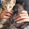 ダンボール箱から救い出された美人姉妹 ココとミル