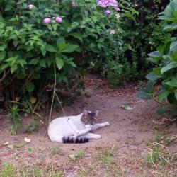 TNR後の猫さん
