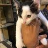 仔猫を保護しています。 サムネイル2