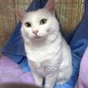 ライトグリーンの目☆リリちゃん 1歳 サムネイル3