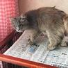 人懐こくて性格花丸のママ猫 サムネイル2