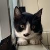 生後約4ヶ月の可愛い猫ちゃんです