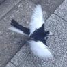 ::里親前:: 珍しい鳥を街中で発見