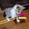 子猫カイト君の里親さん募集 サムネイル2