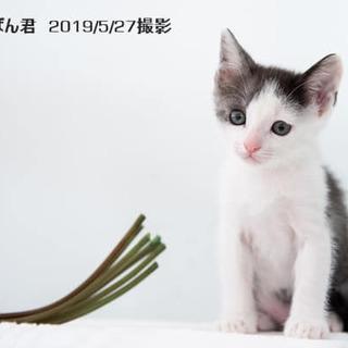 白黒子猫 ばん君 里親様募集♡