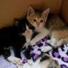 保健所保護猫 1ヶ月 二匹姉妹子猫里親募集 サムネイル3