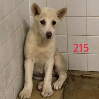 緊急!処分対象の子犬です。助けて下さい。215