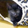 丸顔の黒猫・おっとりの甘えん坊バンダイ