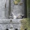 子猫ちゃんの優しい里親様募集! サムネイル2