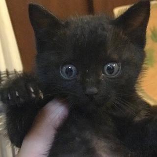 母猫事故死クロネコ♀1か月半6/14~トライアル中
