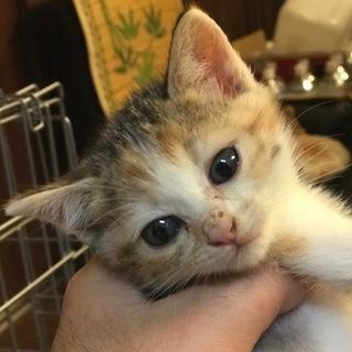 母猫事故死三毛♀