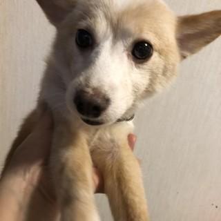 個人飼育崩壊保護・推定7歳・オス・小型犬・康太