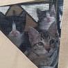 保健所保護猫  ハチワレちゃん1ヶ月子猫里親募集 サムネイル4