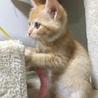 仔猫  サムネイル2
