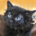 長毛黒猫ちほちゃんは抱っこでゴロゴロが止まらない♡