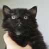 長毛黒猫ちほちゃんは抱っこでゴロゴロが止まらない♡ サムネイル2