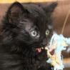 長毛黒猫ちほちゃんは抱っこでゴロゴロが止まらない♡ サムネイル3
