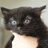 長毛黒猫ちほちゃんは抱っこでゴロゴロが止まらない♡ サムネイル5