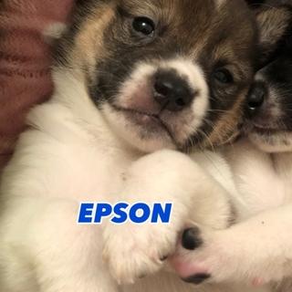 EPSON くん ⭐︎ 1ヶ月半