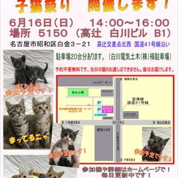 子猫祭り! (猫の譲渡会)
