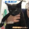 甘えん坊な構ってちゃん♡4〜5ヶ月の黒子猫 011