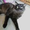 ゴミを漁っていた元飼い猫★今度こそ幸せに サムネイル7