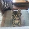 野良出身 子猫 仮名「りん」