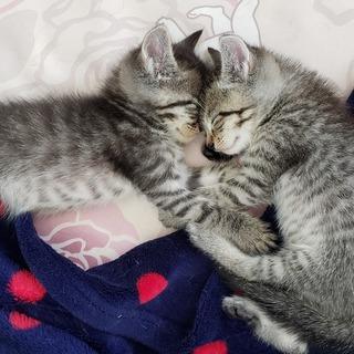愛らしいキジっ子兄弟「海人」「健人」