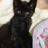 超甘えん坊な黒猫男子*紬くん(募集一時停止)