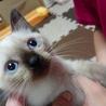 【那覇市/子猫】ぼくの新しいおうち