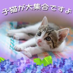 保護猫の里親会【神奈川県開成町】足柄地域初回開催!