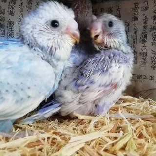 5月産まれ三羽雛