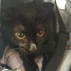ご縁のあった黒猫ちゃん