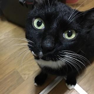 5歳8ヶ月 白黒猫 穏やかなふくくん