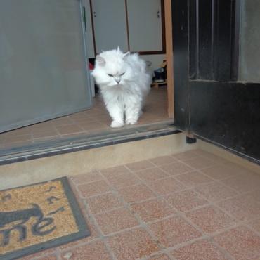 網戸開けたのに~。出てこない。。。。