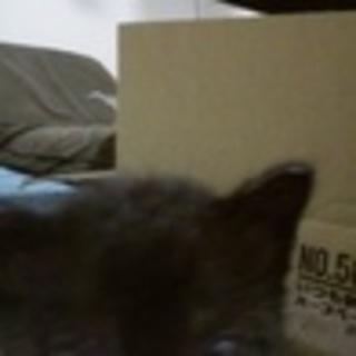 黒猫の子猫の里親募集