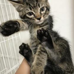 9月23日に愛知県豊橋市で犬猫の譲渡会 サムネイル2
