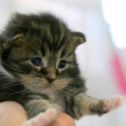 保護猫募集中