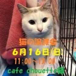 《釧路市》 猫の譲渡会