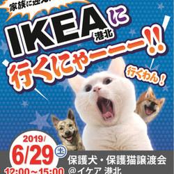 保護犬・保護猫譲渡会@IKEA港北