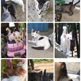 緊急!白猫大集合!!助けて下さい!