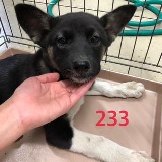 緊急です!3ヶ月くらいの子犬、家族に迎えて下さい。