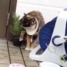 野良猫で首にプラスチックのふた