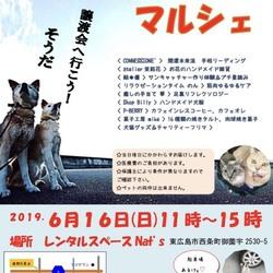犬猫譲渡会&マルシェ